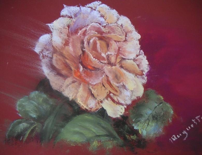 Rose Éclose - pastel sec de Muguett - (44x34)